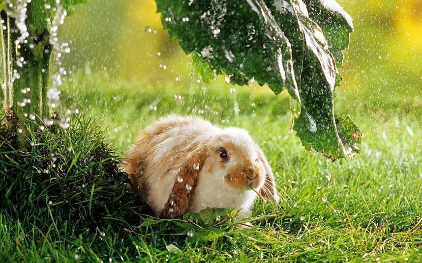 посадили заяц под дождем картинки сельский пейзаж любители